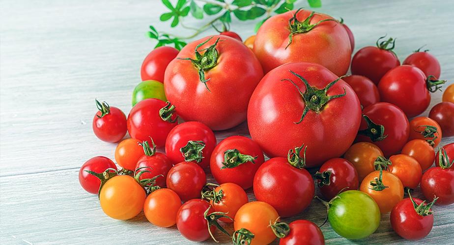ブログ イタリアでトマト会議|「そのまま食べて美味しいトマト缶」開発秘話(前編)|おいしい情報